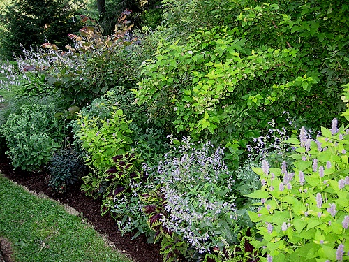 Another shrub border