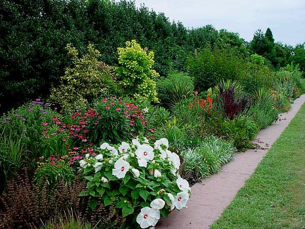 Raulston arboretum border