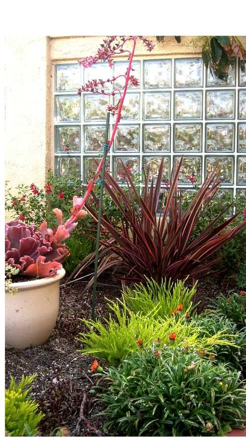 Succulents and phormium