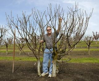 Pruned to size