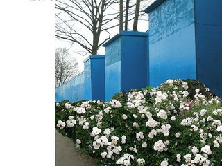 Blue wall with roses
