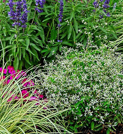 Df on garden