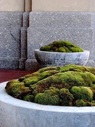 Moss in stone planters