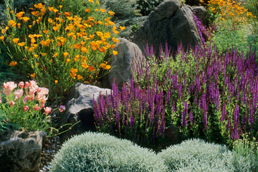 Gardenwright Drought Tolerant Cottage Gardens